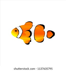 Sea fish clown ocellaris. Amphiprion ocellaris