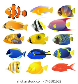 Sea fish collection isolated on white background. Vector illustration