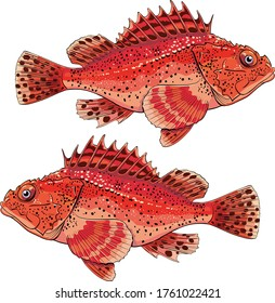 sea fish grouper red ugly