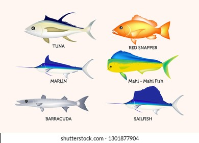 Sea fish set. Vector illustration of different types of Tuna Fish, Marlin, Sailfish, Barracuda, magi - magi or dolphin fish and red snapper isolated on white background vector