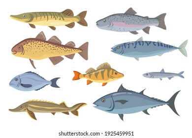Sea and freshwater fish set. Tilapia, halibut, sardine, dorado, herring, salmon, garfish isolated on white. Vector illustration for fishery, seafood, fish market, gourmet concept