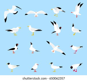 Sea Gull, a beautiful bird. Cute bird in cartoon style. Floating, standing and flying birds in a flat style. Seagulls in a flat style.