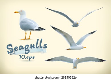 Sea gulls vector icon set