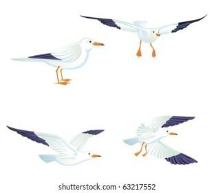 Sea gulls, vector illustration