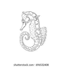 Sea Horse. Sea creatures. Vector sketch. Drawn by hand.