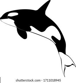 sea killer whale black and white on a white background