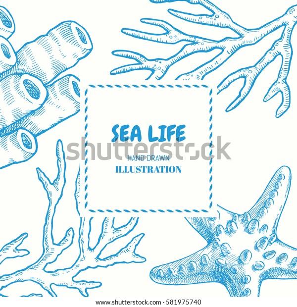 Sea life. Vector hand drawn graphic illustration. Marine seamless pattern