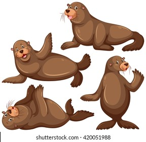 Sea lion in four poses illustration
