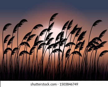 sea oats silhouette in sunset
