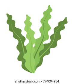 A sea plant, flat vector icon of a seaweed