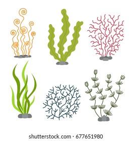 Sea plants and aquatic marine algae. Seaweed set vector illustration