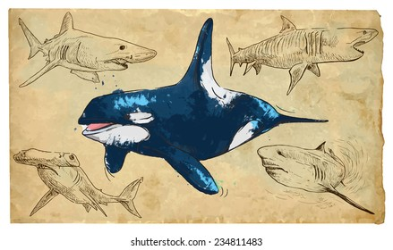 SEA PREDATORS. Collection of an hand drawn illustrations (originals, no tracing). Drawings are editable in layers and groups. The color layers are separated.