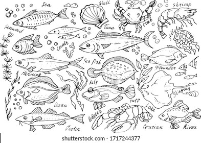 Sea and river fish doodle sketch vector illustration line graphic different types of fish flounder tuna crab shrimp wildlife seafood restaurant shop kitchen cooking food tradition menu ear