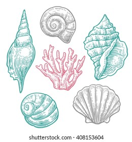 Sea shell and coral.  Nautilus  fauna nature ocean aquatic underwater vector set.  Engraving Hand drawn vintage illustrations. Isolated on light background.
