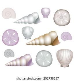 Sea Shells Clip Art Illustrations.