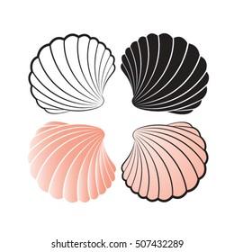 sea shells color variations-vector drawing
