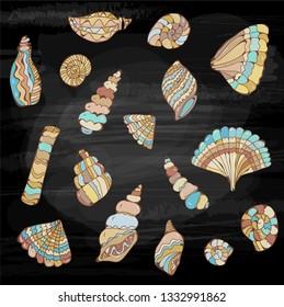 Sea shells set on the blackboard, sketch style. Vector graphic illustration