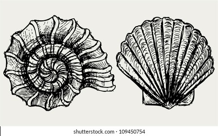 Sea Snail And Scallop S
