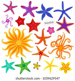 Sea stars set. Multicolored starfish on a white background. Starfishes underwater invertebrate animal. Vector illustration.