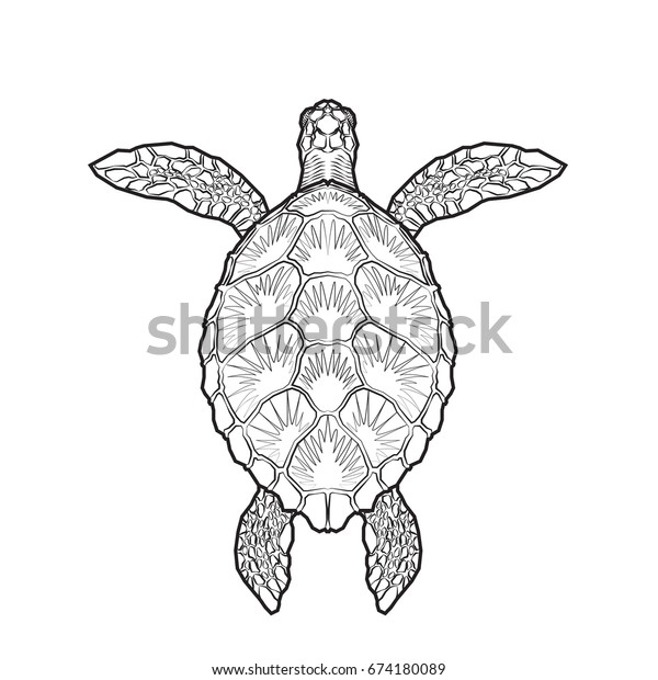 Sea Turtle Coloring Page Sea Turtle Coloring Page 4 Learn About ... | 620x600