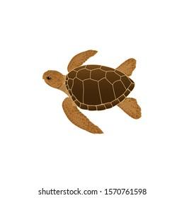 Sea Turtle color vector style