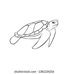 Sea turtle in line art vector