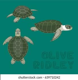 Sea Turtle Olive Ridley Cartoon Vector Illustration