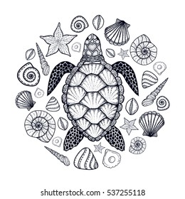 Sea turtle and shells in line art style. Hand drawn vector illustration. Top view. Design for coloring book. Set of ocean elements