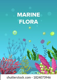 Sea underwater marine background. Marine sea bottom with aqua plants, coral reef underwater seaweed plants, ocean plants, algae, laminaria, sea moss tropical plant. Underwater life vector