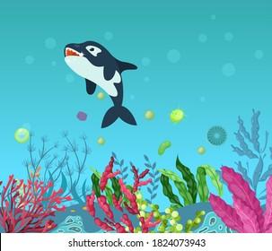 Sea underwater marine background with killer whale . Marine sea bottom with aqua plants, coral reef underwater seaweed plants, ocean plants, algae, laminaria. Undersea world animals cartoon vector