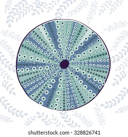 Sea urchin colorful illustration. In vector format