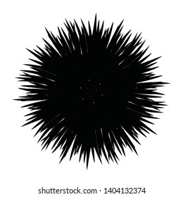 Sea urchin isolated on white background, vector illustration
