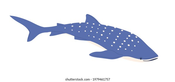 Sea whale shark with dots on back. Big ocean fish. Large underwater animal with spotty pattern. Colored flat vector illustration of whaleshark isolated on white background