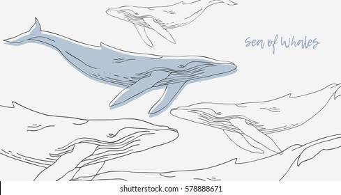 Sea of Whales. Hand draw linear graphically simple silhouette whales background for cards posters flyers invitations. Suitable for printing on fabric. Vector illustration isolated on white background.