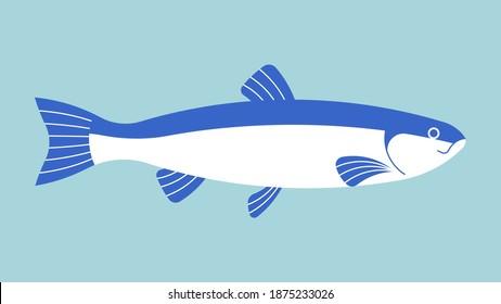 Seabass fish. Sea fish with white meat. Mediterranean Kitchen. Vector illustration of fresh fish.