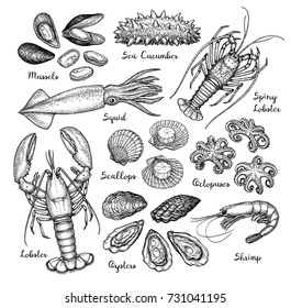Seafood big set. Ink sketch isolated on white background. Hand drawn vector illustration. Retro style.