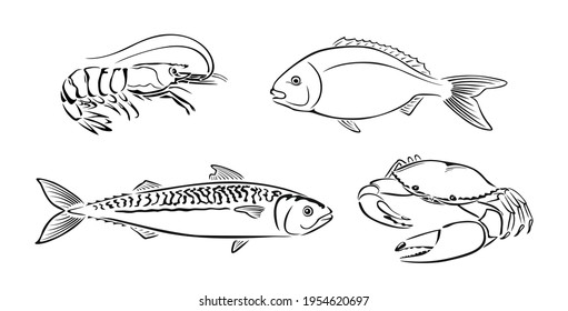 Seafood black and white outline. Vector illustration of dorado, shrimp, crab and mackerel. Set of Fish and crustacean.