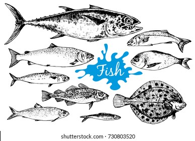 Seafood collection. Hand drawn set with tuna, dorado, mackerel and other different sea fish in sketch style