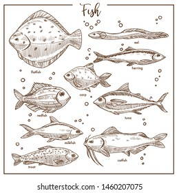 Seafood fish underwater animals species isolated sketches vector flatfish and eel herring and carp redfish and tuna milkfish and catfish trout, flippers and tail sea or river creatures swimming