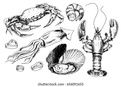 Seafood hand drawn collection with crab, lobster, shrimps and other sea animals in sketch style
