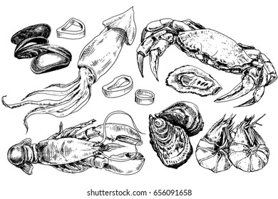 Seafood hand drawn collection with crab, lobster, squid and other sea animals in sketch style
