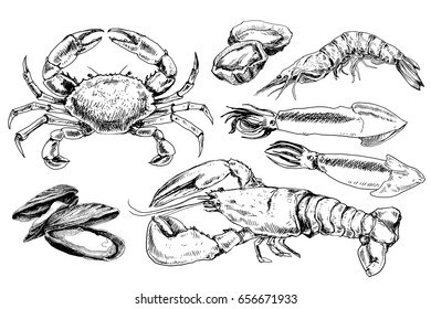 Seafood hand drawn collection with crab, lobster, mussels and other sea animals in sketch style
