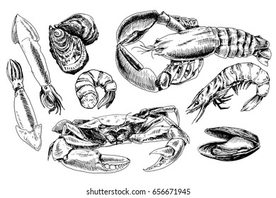 Seafood hand drawn collection with crab, lobster, squids and other sea animals in sketch style