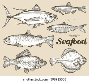 Seafood. Hand drawn sketch vector illustration of different fish
