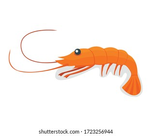 Seafood shrimp, ocean delicacy food isolated on white cartoon vector illustration. Prawn for grill, asian meal concept.