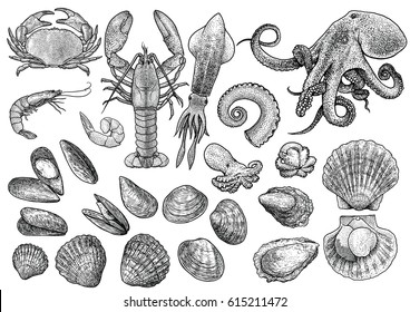Seafood, shrimp, prawn, crab, lobster, squid, octopus, mussels, scallop, clam, oyster, cockle shell  collection illustration, drawing, engraving, ink, line art, vector