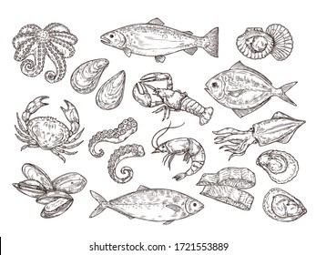 Seafood sketch. Vintage fish, drawing food. Delicious shrimp, shell squid. Sea cuisine, grilled crab calamari. Fresh raw market vector set