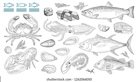 Seafood vector illustrations. Fresh sea fish, lobster, crab, oyster, mussel, squid, sushi rolls. Vintage design with hand drawn sketch. Line art style