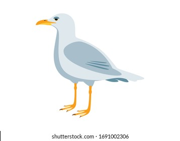 Seagull bird color icon vector. Seagull isolated on a white backgound. Standing seagull clip art. Gull vector illustration