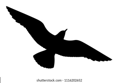 Seagull silhouette on white background, vector illustration